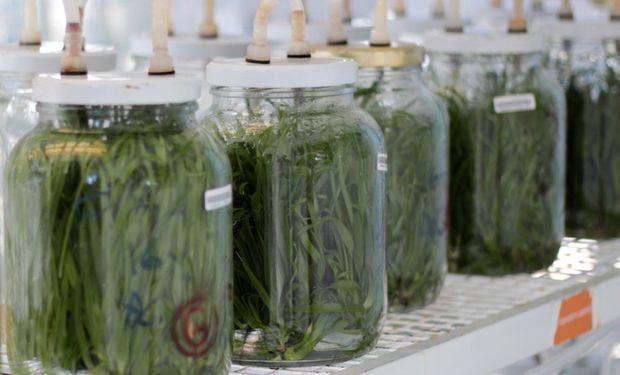 Buenos Aires instalará un laboratorio de cultivo de tejidos vegetales
