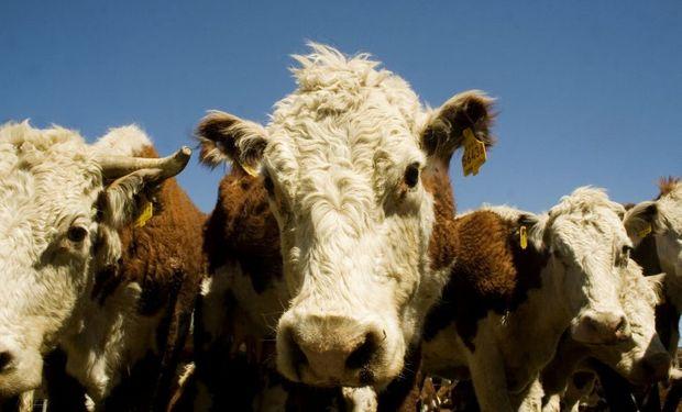 La exportación demanda animales más pesados y mayor producción.