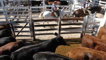 La vaca de conserva mostró quebrantos importantes