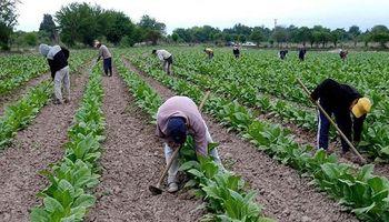 Tabacaleros plantearon la necesidad de rever precios y la transferencia de recursos