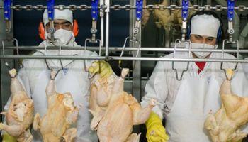 Federación de la Carne alcanzó aumento paritario del 50% para el sector avícola