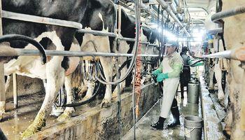 Encuentro latinoamericano de lechería: detalles del Congreso que comienza hoy