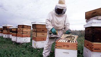 Región pampeana: el precio de la miel creció un 80% en el año