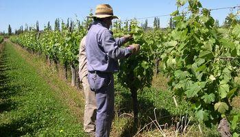 El alcance de la doble indemnización en el despido sin causa de trabajadores rurales