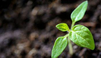 Con inteligencia artificial, se puede predecir qué plantas se extinguirán