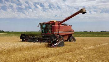 Un molino no pudo justificar el origen del trigo que procesa