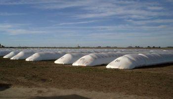 Cuáles son los principales indicadores de pérdida de calidad de grano