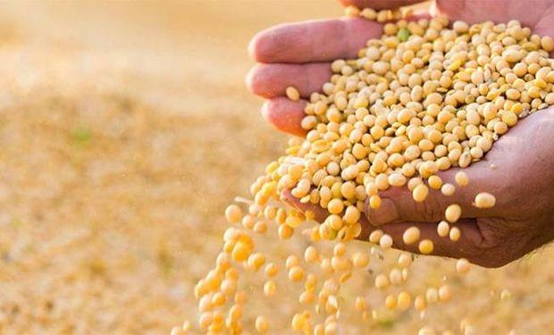 En noviembre, la semilla será la protagonista con el primer Congreso Argentino