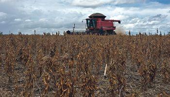 Sube la soja y el mercado mira a Sudamérica para conocer el volumen de la cosecha