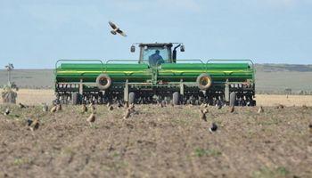 Récord productivo: el trigo busca alcanzar más de 20 millones de toneladas y aumenta su superficie