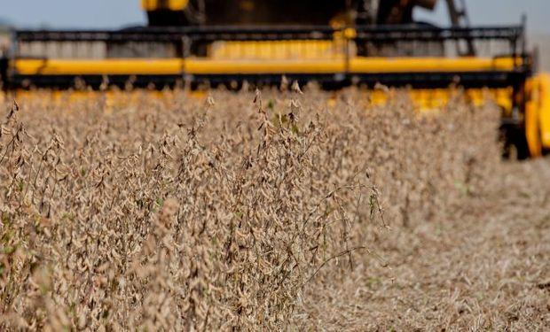 Empresas nucleadas en CIARA-CEC ingresaron más de US$ 15 mil millones en 2019 por la exportación de granos y subproductos.