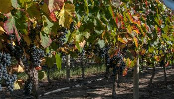 Desafíos y oportunidades para la vitivinicultura