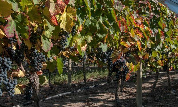 En Doña Paula, todos los vinos son elaborados a partir de la producción propia de más de 700 hectáreas