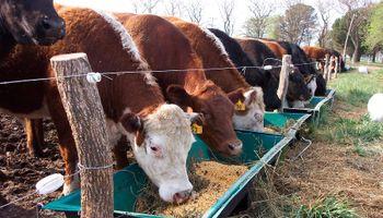 Un Uruguay con más vacas y menos ovejas