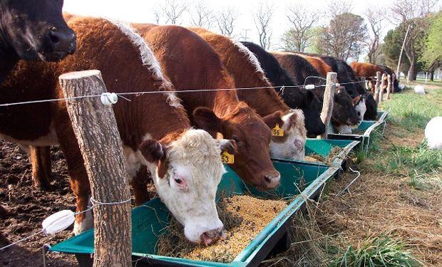 Se la exceptuó de la resolución que da de baja a los alimentos para animales que contengan antibióticos y antiparasitarios.