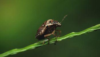 Alertan por el ingreso de tres nuevas plagas que podrían afectar a la producción agropecuaria