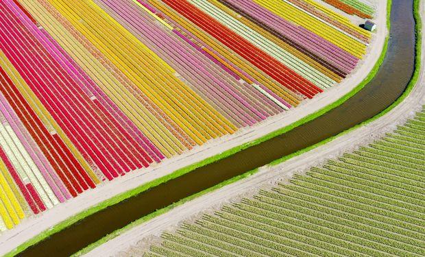 Campo de tulipanes, Holanda.