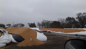 Indignación en un productor al que le rompieron tres silo bolsas en medio de las lluvias