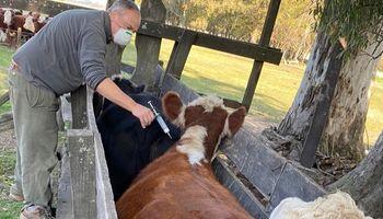 El centro y norte de Buenos Aires vacunó a más del 80 % de los bovinos contra la fiebre aftosa