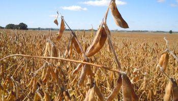 Sube la soja y corta una racha negativa que la llevó a caer un 7% en enero