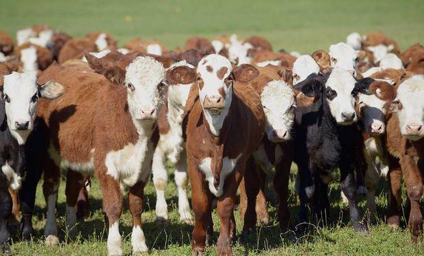 Se concentrará la venta de 17.842 cabezas grabadas por todo el país por diez consignatarios.