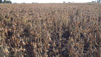 Las cadenas agroindustriales se refirieron a la prohibición de agroquímicos en La Pampa