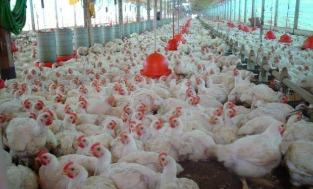 Sanidad y prevención, aspectos centrales en la avicultura