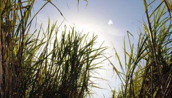 Por primera vez, Argentina será sede del Congreso Mundial de la Caña de Azúcar