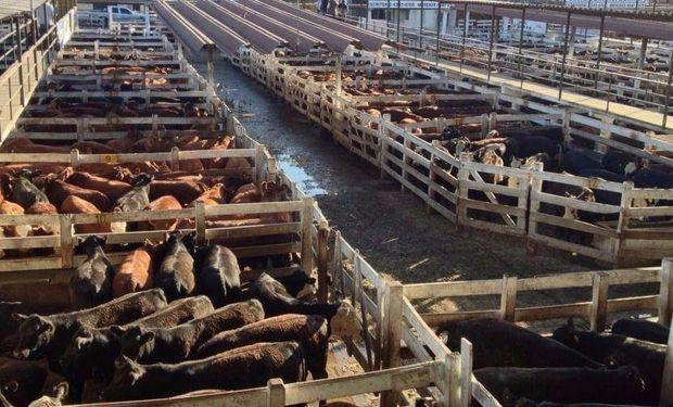 Las vacas buenas mantuvieron sin considerables cambios sus respectivas cotizaciones a lo largo de la última semana.
