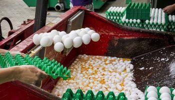 La alerta por los huevos contaminados afecta ya a siete países europeos