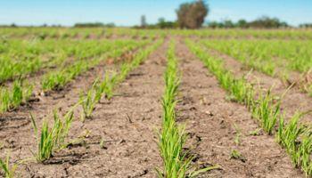 Entre Ríos tiene la mitad de productores de arroz que en 2010