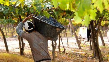 La vitivinicultura mira al 2030 con un plan que incluye la sostenibilidad ambiental y enoturismo