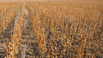Relevan 120 años de cosecha y lo relacionan con las políticas aplicadas al sector