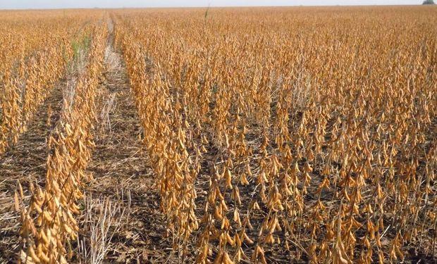 Los futuros de soja operan con subas de 1 dólar tras varias jornadas consecutivas en baja.