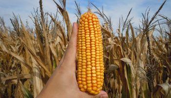 La oferta y demanda mundial de soja, maíz y trigo en 6 gráficos
