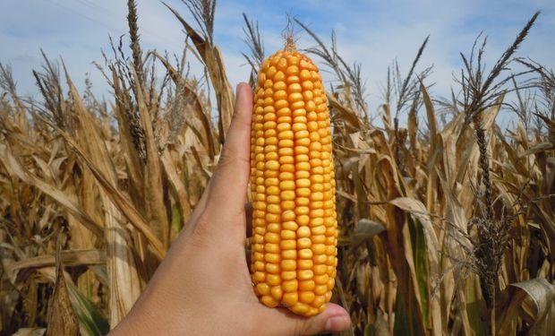 El USDA publicó las cifras mensuales de oferta y demanda mundial de los principales granos.