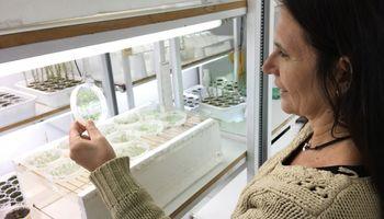 Una ayuda a las plantas para protegerse de los rayos UV