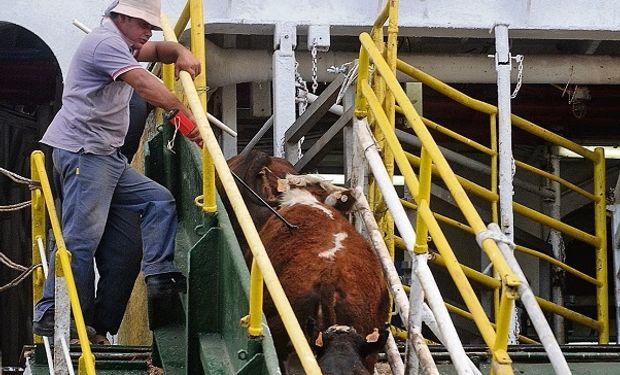 Uruguay reactivó la exportación de carne a China y ganado en pie a Turquía