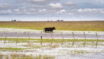 Inundaciones en el norte: detalle de las medidas de Agroindustria por provincia
