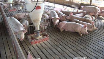 Entre Ríos destacó el crecimiento de la actividad porcina y alcanzó el cuarto puesto en producción