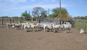 Entre Ríos: destinan 9,5 millones de pesos a producciones ovinas y caprinas