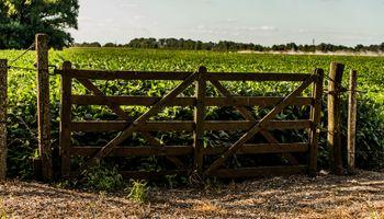 El agro, la construcción y el real estate: los sectores que están reactivando la economía