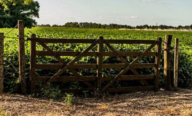 El agro es uno de los sectores que está impulsando la economía.