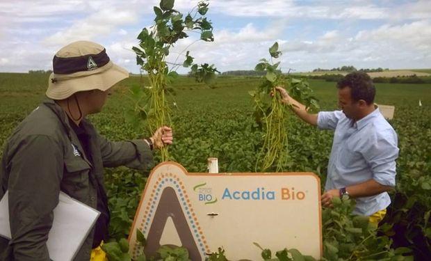 La tecnología Active Bio  trabaja sobre la salud integral de la planta y reduce el impacto del estrés abiótico.