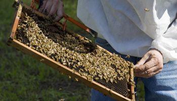 Una aplicación móvil para la actividad apícola