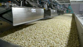 Modifican trámites para exportadores de maní y tabaco a Estados Unidos