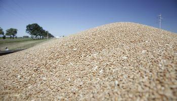 Se dejan de recaudar 11 mil millones de pesos por la informalidad en la cadena de trigo