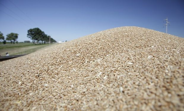 El impacto de la informalidad en la cadena de trigo.