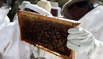 Implementan trazabilidad apícola para salas de extracción de miel