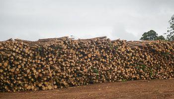 Lanzan una herramienta online para visualizar las extracciones forestales